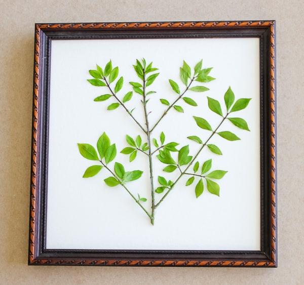 Pressed Leaf Art