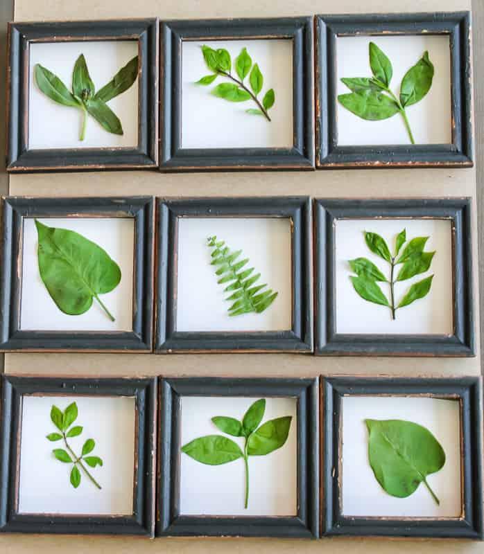 Single Pressed Leaves Framed